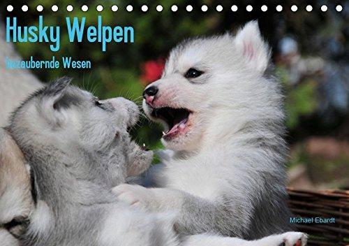 Husky Welpen (Tischkalender 2019 DIN A5 quer): Siberian Husky Welpen sind wahre Schönheiten. Davon kann man sich beim Anblick dieser Bilder überzeugen (Monatskalender, 14 Seiten ) (CALVENDO Tiere)
