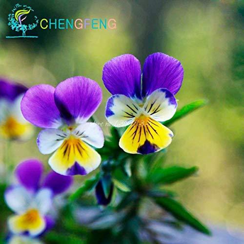 VISTARIC Brown: 10 Pcs Canna Graines Beautiful Flower Seed Mix Indica Lily Jardin des plantes Ampoules Fleurs extérieur Bonsai Flores pot. Accueil cadeau