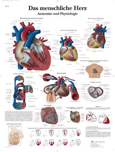 3B Scientific Lehrtafel - Das menschliche Herz - Anatomie und Physiologie