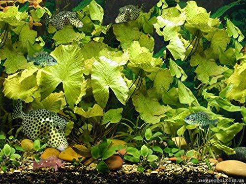 Digitale olieverfschilderij om zelf te maken, tropische vissen in het aquarium, cadeau voor familie, handgeschilderde olieverfschilderij op canvas, moderne kunst, 40 x 50 cm
