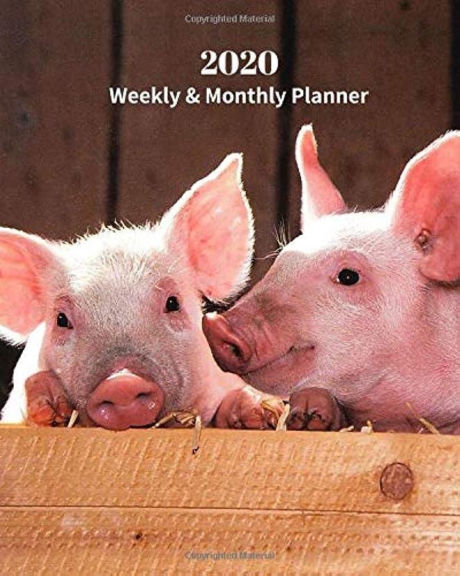 属性呼び出すカビ2020 Weekly and Monthly Planner: Two Pink Piglets - Monthly Calendar with U.S./UK/ Canadian/Christian/Jewish/Muslim Holidays– Calendar in Review/Notes 8 x 10 in.- Wildlife Nature Pig