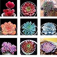 多肉植物 花の種 LEDGOO ミックス 約100粒