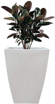 EVERGREEN GARDEN Yuccabe Italia Fox-B TK Sqaure 18 Inches Planter (Off White)