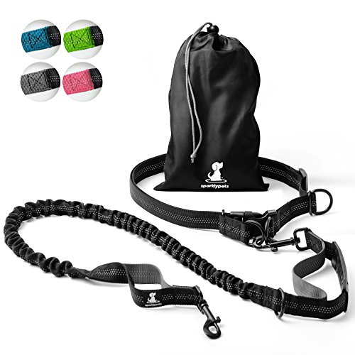 Best Leash For Training To Walk