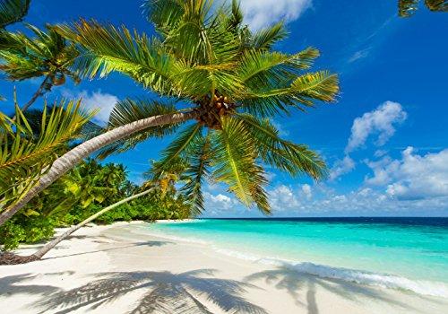 XXL Poster 100 x 70cm (S-838) Palme am Strand in strahlend hellem Sonnenschein (Lieferung gerollt!)