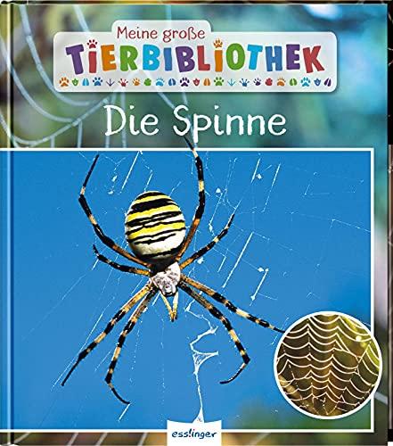 Meine große Tierbibliothek: Die Spinne: Sachbuch für Vorschule & Grundschule