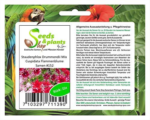 Stk - 15x Staudenphlox Drummondii Mix Cuspidata Flammenblume Samen #152 - Seeds Plants Shop Samenbank Pfullingen Patrik Ipsa