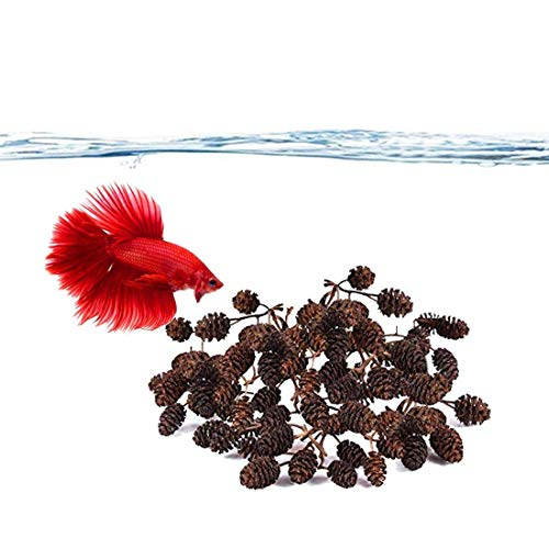 SunGrow Alder Cones for Betta Fish, 0.5-1 Inch, Promotes Breeding in Freshwater Tanks, Perfect for Both Big and Small Aquariums, 100 Pieces