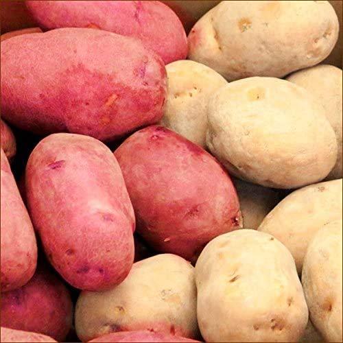 北海道産 訳あり 新じゃが じゃがいも レッドムーン&インカのめざめ 詰め合わせ 4kg 野菜 北海道 お取り寄せ