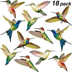 Kolibri Haftet Vogel