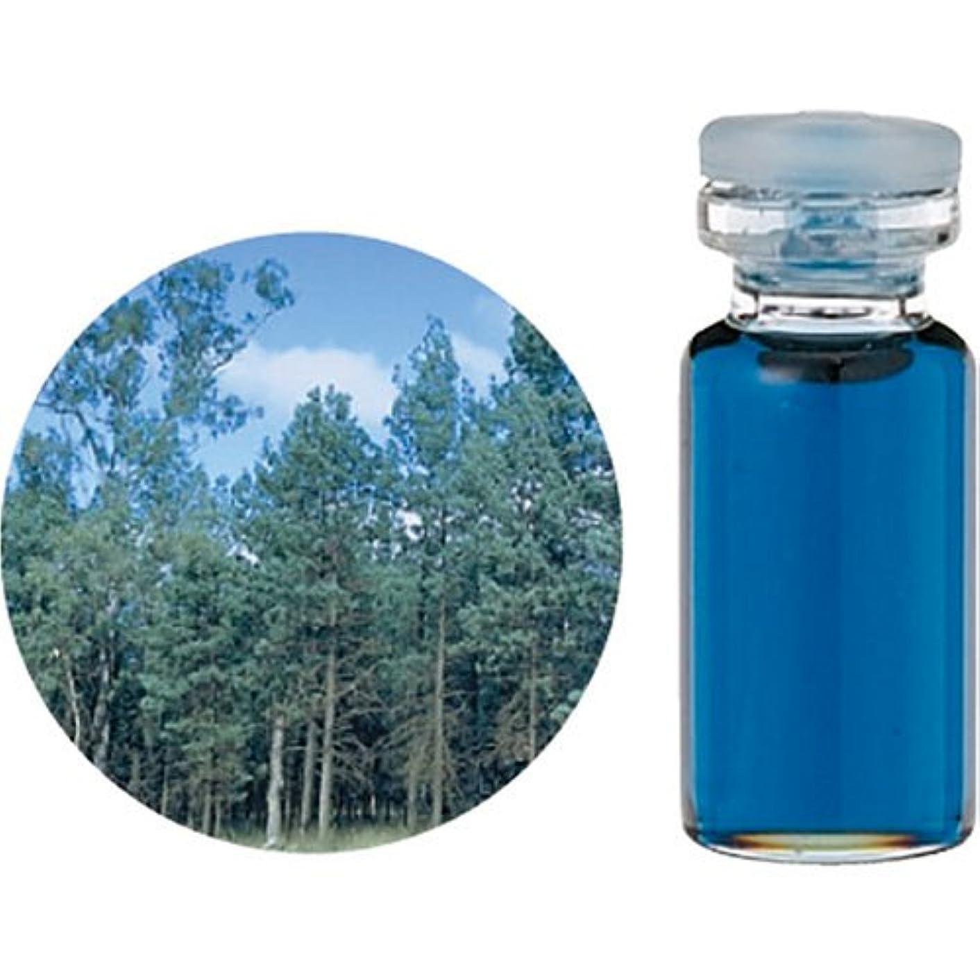 困惑した柔らかい学校教育生活の木 C ブルー サイプレス エッセンシャルオイル 10ml