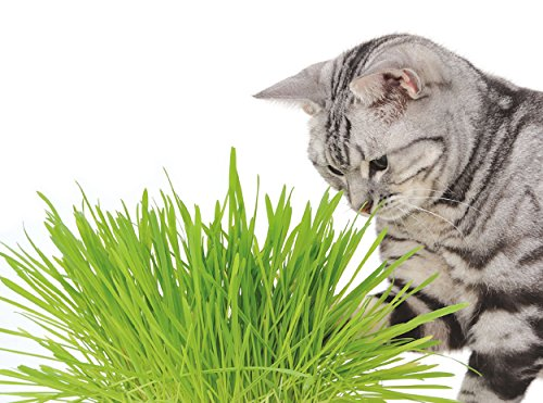 ペティオ『猫の元気草』