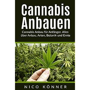 Cannabis anbauen für Anfänger. Alles über Anbau, Arten, Botanik und Ernte
