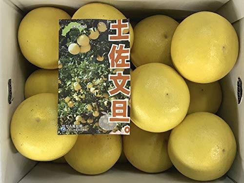 高知県産 土佐文旦 M〜Lサイズ 10kg