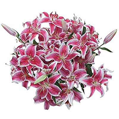 GlobalRose 35 Blooms of Stargazer Oriental Lilies 10 Stems - Fresh Flowers for Delivery from Globalrose