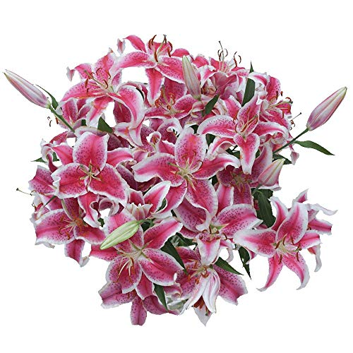 GlobalRose 35 Blooms of Stargazer Oriental Lilies 10 Stems - Fresh Flowers for Delivery