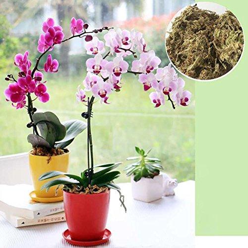 Sustrato de musgo esfagno deshidratado para cultivo de orquídeas Phalaenopsis, cultivo sin...