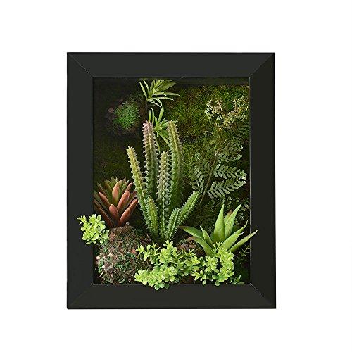 Plantes succulentes...