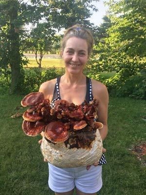 Mushroom Man LLC, Reishi Mushroom Kit - Indoor Growing Kit ~ Reishi's Legacy spans...