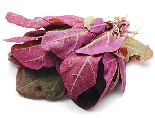Seedeo Gartenmelde rubinrot (Atriplex hortensis var. Rubra) 100 Samen