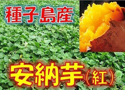 新芋(2020年産) 種子島産 安納芋 「安納紅」 小粒(Sサイズ) 1箱:約2kg入り  安納いも