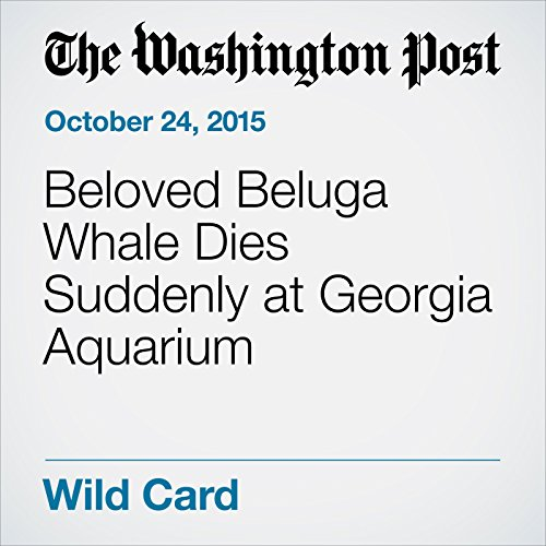 Beloved Beluga Whale Dies Suddenly at Georgia Aquarium cover art