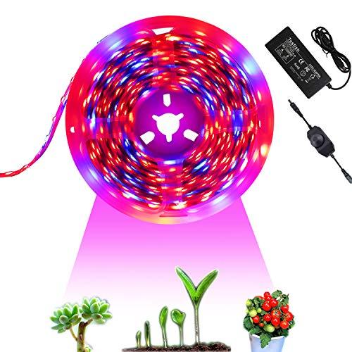 Tesfish 12V Lámpara de Plantas 5M con Adaptador de Corriente y atenuador, Luz de Plantas Lámpara Espectro Completo Rojo Azul 4: 1 para Plantas de Interior Invernadero, Planta de Acuario