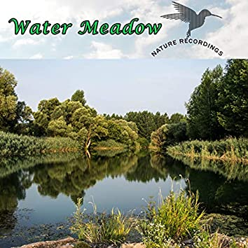 Water Meadow (Nature Recordings)