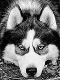Nueva llegada pintura de diamantes perro 5D DIY negro blanco bordado de diamantes Animal punto de cruz mosaico decoración del hogar regalo A2 50x70cm