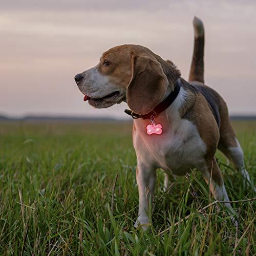 Colgante luminoso para perro, placa identificativa para perro, luz de seguridad para perros, accesorios mascotas, placa con nombre, collar luminoso perro