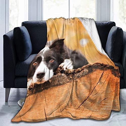 "Affordable shop FleeceBlanket50""x60""- Dog Friend Tree HomeFlannelFleeceSoftWarmPlushThrowBlanketforBed/Couch/Sofa/Office/Camping"