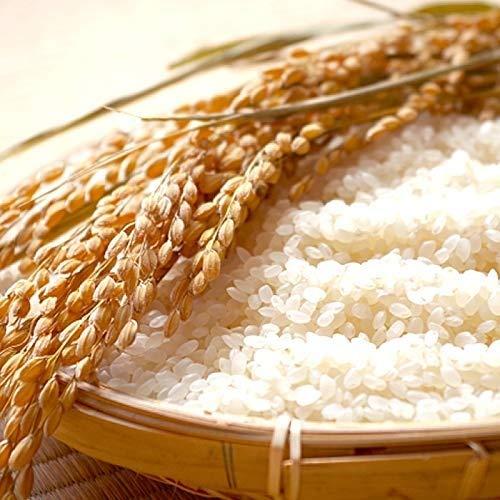山形県産 ササニシキ 令和元年度産 (玄米 10kg(5kg×2袋), 白米に精米後 9kg(4.5kg×2袋))