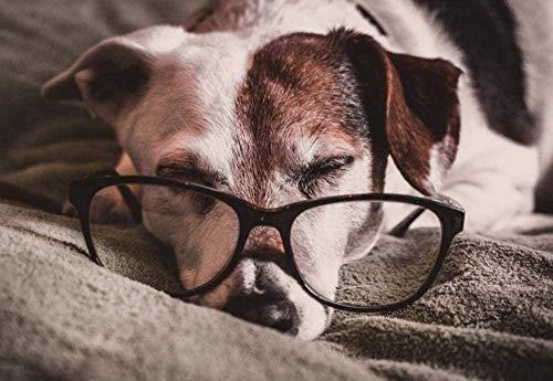 Pintura de diamante 5D Stafford Bull Terrier con gafas, diamantes de imitación de cristal, imágenes bordadas, pintura de diamante DIY para decoración de sala de estar, pegatinas de pared 40 * 50Cm