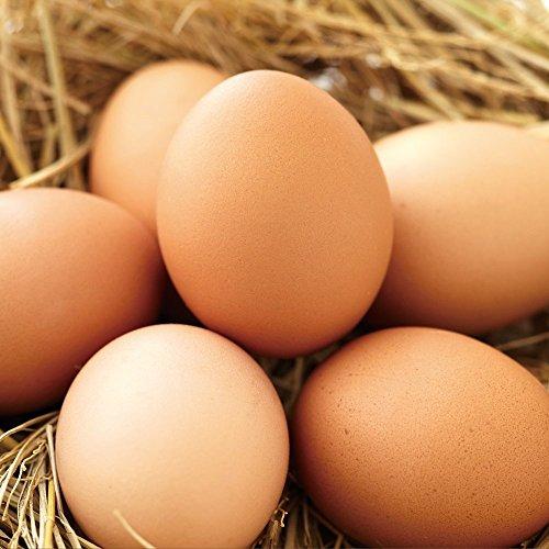 財宝『おいしい卵』