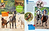 WAS IST WAS Pferde und Ponys: Reiten, Fohlen, Pferdesprache, Turniere, Zucht und Pflegepferd! (WAS IST WAS Edition) - 8
