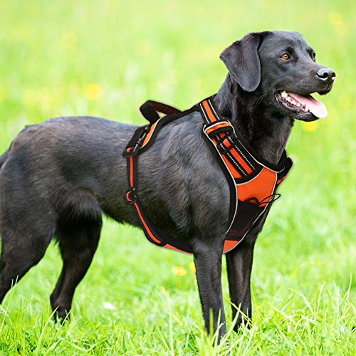 LovinPet Dog Harness