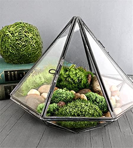 SUSHANCANGLONG Mini Forma de Diamante Colgando terrario de Vidrio, tiranos Locales de Soldadura geométrica de Vidrio geométrico Negro para Plantas Musgo