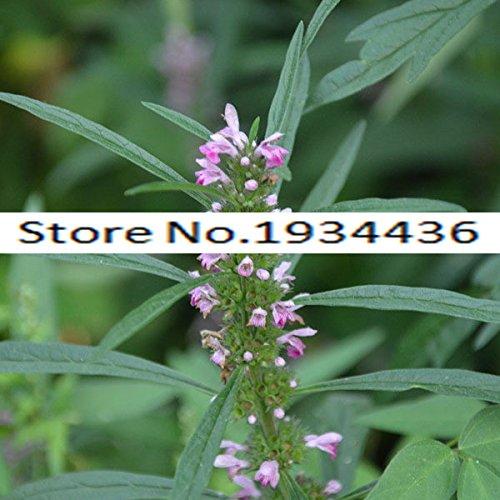 11.11 En oferta! Venta caliente de semillas Agripalma semillas de flores de hierbas, semillas-Sobre el paquete original de 100 partículas