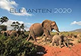 Elefanten 2020: Liebenswerte Dickhäuter