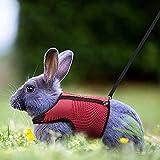 Verstellbares Weiches Kaninchen Geschirr mit Elastischer Leine für Kleines Tier Kitty Haustier Geschirr und Leine für Häschen Katze Little Pet Walking
