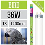 Ardacia FB-36 Bird Lamp, 36 Watt