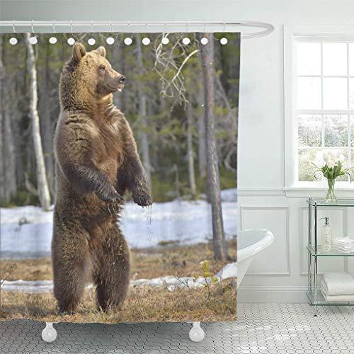 lovedomi Duschvorhang Grizzly Braunbär Ursus Arctos stehend auf Seiner Hinterhand Duschvorhang-Sets mit 12 Haken 72x72 Zoll wasserdichtes Polyester-Gewebe-Badezimmer-Set