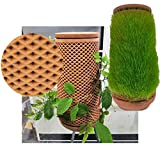 Self-watering Terracotta Planter