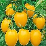 cioler seme di fiore- 100pcs semi di pomodoro rari,giardino di casa balcone organic delicious fruit rarità ortaggi ornamentali tomato seeds