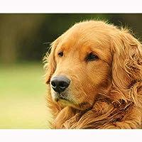 ダイヤモンド絵画5DDIYダイヤモンド絵画ラブラドール犬動物ダイヤモンドモザイク犬刺繡クロスステッチセット家の装飾40x50cm