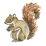 'Removable Wall Stickers/Wall Murals - Cute Squirrel for Kids babyroom Home Decoration Wallpaper Living Room Bedroom Animals Size 11.4