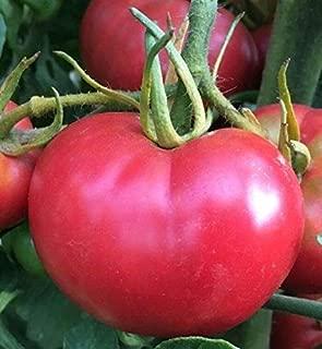 Bradley Tomato Seed - Heirloom Southern Favorite Indeterminate 1 Gr