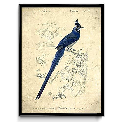 Tableau imprimé de merles bleus - tableau vintage Bird Print 18 - VP1072UK, Coton, Daybreak., 70 x 100 cm