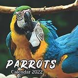 Parrots Calendar 2022: Monthly Square Calendar 2022-2023, 16 Month Calendar, Cute Animal Calendars, Home And Office Calendar For Animal Lovers