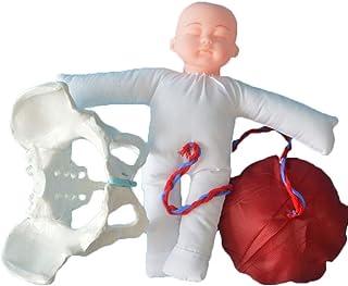Life Size Pelves Female Model, Hip Model - I Department Pelvic Model Demonstration, Pelvis Start Anatomical Model